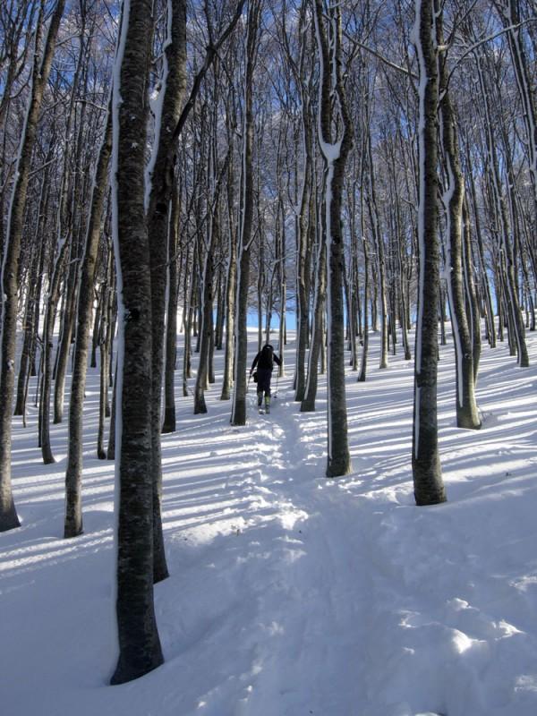boschi-monti-Ernici