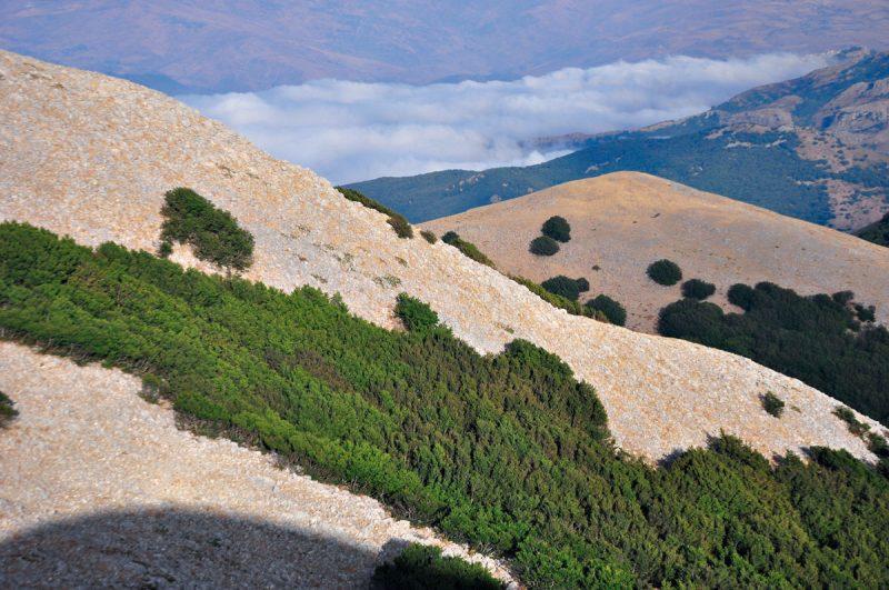 Escursione sui boschi delle Madonie. Foto di Stefano Ardito