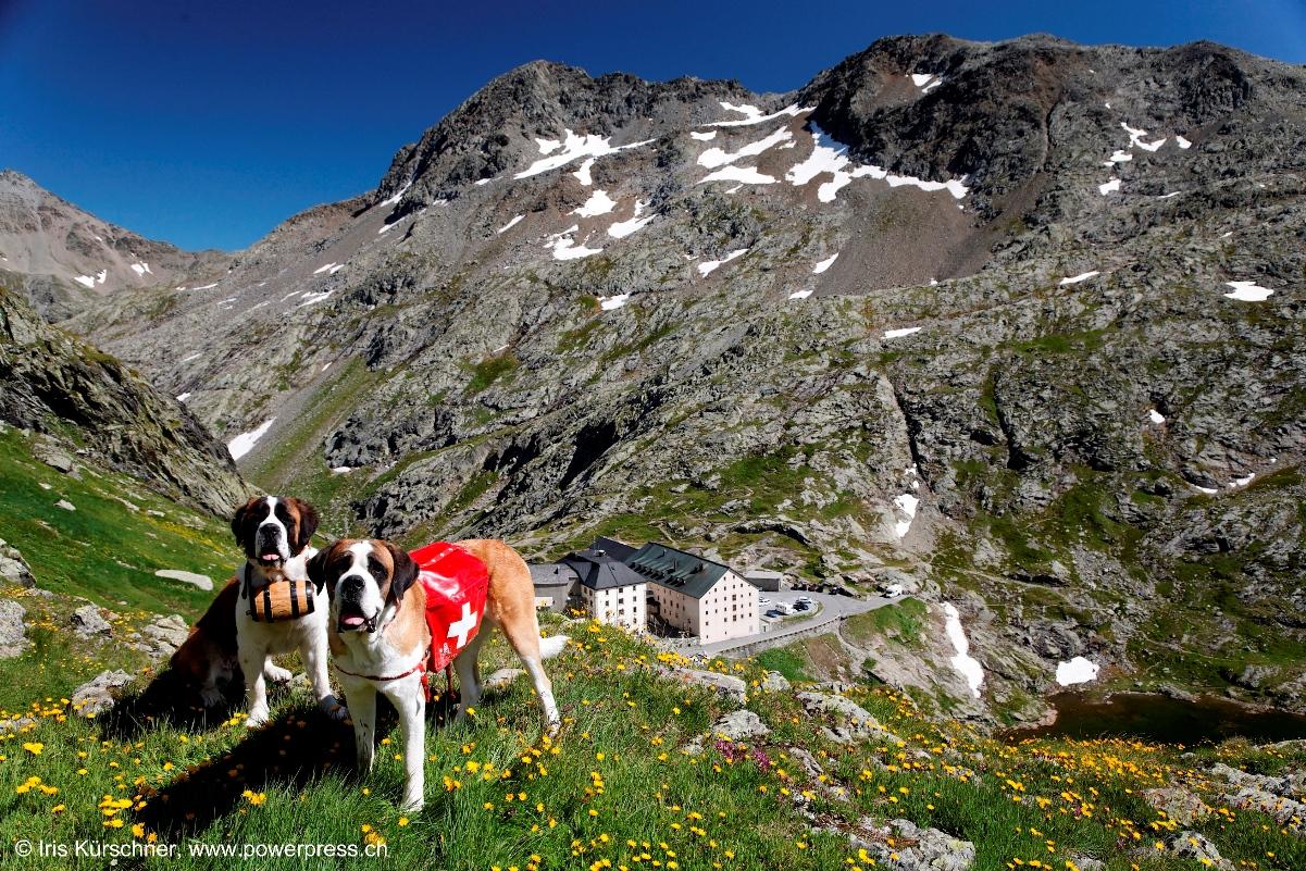 escursioni gran san bernardo